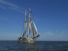 Koh-i-noor, a galjas approaching (Alta alatis patent) Tags: kohinoor galjas sailing charter tallship waddensea