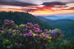 Quiet Vibrance (Appalachian Hiker) Tags: sunrise mountains rhododendron mountainlaurel flowers blooms spring blueridgeparkway westernnc
