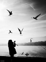 Feeding the wild animals (René Mollet) Tags: animal wild birds feeling fly girl street streetphotography shadow silhouette lake lakefront renémollet urban