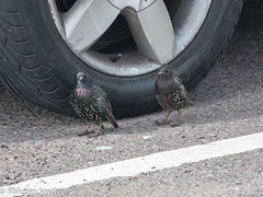 Car Tyre Camouflage (M C Smith) Tags: pentax k3ii tyre car parking tarmac line silver white black birds