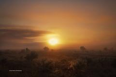 Foggy Sunrise (Jacqui Barker Photography) Tags: flindersranges southaustralia southaustraliaoutback southernhemisphere australia australiaoutback australiansunrise foggymorning fog mountainrange australianlandscape