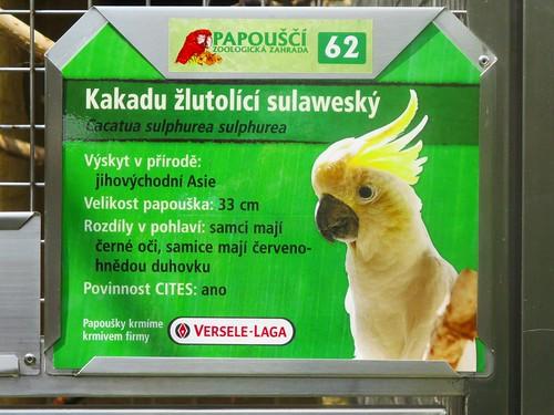 Bošovice - papouščí zoo -  Kakadu žlutolící Sulaweský