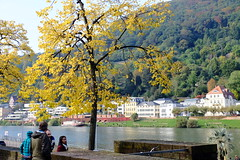 Neckar with autumn colors (DSLEWIS) Tags: neckar river neckarriver heidelberg bridge brucke gate fortifications germany deutschland roadscholar tour