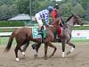 2016 Jim Dandy Day (first_dude) Tags: saratoga jimdandystakes horseracing thoroughbred nyra