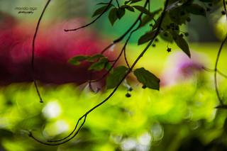 Garden of Dreams ...