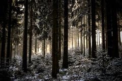 La-Kimisch (PetschoX5) Tags: trees forest cyansworld cyans verlorenewälder wälder myst bäume feldberg hessen hochtaunuskreis