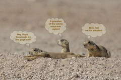 Happy Weekend Everybody!  Hope you all have a blast! (Squirrel Girl cbk) Tags: prairiedogs humor comic cartoon
