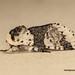 Alder Kitten (Mark_P_VC37) Tags: alderkitten