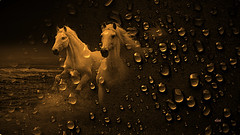 Galloping between the drops of sea (claudiadea131) Tags: horses waterdrops