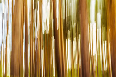 motion blur up and down the trees (sergeitukach) Tags: abstract background bc blur blurred blurry britishcolumbia canada dream environment forest impressionist landscape lines motion movement panning rainforest slow trees trunk unique upanddown vancouverisland vancouverislandforest vancouverislandmap wood woodland green moss greenery greenerybackground greenerylandscape light ethereal etherealbackground etherealforest ethereallandscape bright branches blue orange pink brown white vibrant warm black silhouette