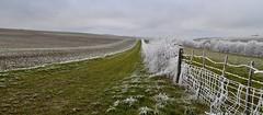 Etre totalement givré n'empêche pas d'avoir chaud ! :-) (Thierry.Vaye) Tags: hiver2017 janiver nièvre givre panorama lignedefuite chemin barrière
