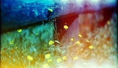 (Victoria Yarlikova) Tags: film nature analog lomo agfa 35mm zenit122 lightleaks scan smallformat retro vintage expiredfilm anlogue outdoors spring