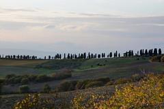 typisch Toscana (id_4862) Tags: toscana zypressen horizont landschaft