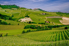langhe 7 (lotti roberto) Tags: langhe piemonte barolo vineyards vigneti italy italia wine green verde