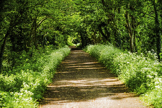 the flower lined path