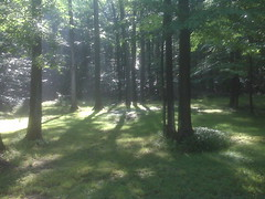 IMG01399 (freddiewentworth) Tags: woodlands nature scenery tranquil landscape outdoors ethereal trees woods light rays daybreak forest wilderness