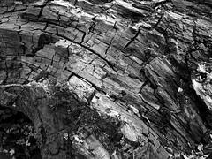 Texture2 (martin.bruntnell) Tags: texture rotted treetrunk