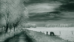 Dreamworld (Frank ) Tags: ir infrared sonydscv1 monochrome dreamy dream landscape limburg meadow field farm agriculture wavelength sony frnk europe horse grass leaves trees spring summer topf50 topf100