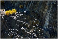 Orgues basaltiques et volcan de Montpeloux (nandOOnline) Tags: auvergne frankrijk lafougeraie landschap livradoisforez natuur orgues basaltiques volcan montpeloux brem basalt vulkaan