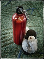 Penny travels with eco-friendly water bottle. (Oh Kaye) Tags: odc pdx stainlesssteel waterbottle penguin 6ws