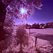 Yet another infrared sunstar