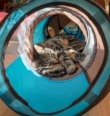 Tunnel of Sleep (Ghita Katz Olsen) Tags: cat pet animal tabby tunnel sleep