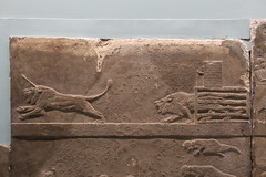 May 10: 78 Lion Hunt Reliefs (Aquafortis) Tags: art london england museums assyrian