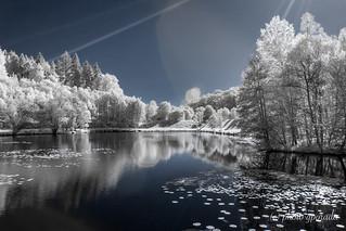 Infrared Spring Awakening