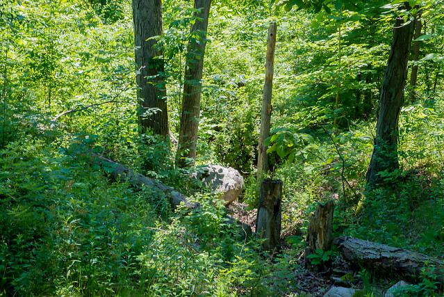Weiler-Leopold Nature Preserve - May 29, 2017