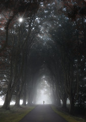 Misty Walker (Dave Holder) Tags: mist fog trees atmospheric dark moody orton landscape light