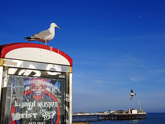 Brighton sea front (Dun.can) Tags: brighton kingsroad palacepier seafront sussex gulls pier blue sky sea seaside