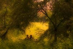 Romance (Cederquist Christoffer) Tags: romance sunglow tamron60mmmacro canoneos60d gothenburg göteborg sweden sverige cederquist love trees nature couple park qualitytime lovecouplecutemegirlboybeautifulinstagoodinstaloveloveherlovehimprettyadorablekisskisseshugsromanceforevergirlfriendboyfriendgfbfbfftogetherphotoofthedayhappyfunsmilexoxo