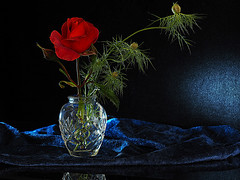 Hot Chocolate (PrunellaCara) Tags: rose flower stilllife blue black red vase cutglass