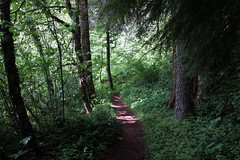 Trail shot (rozoneill) Tags: eugene mckenzie river national recreation trail trailbridge lake carmen reservoir hiking oregon willamette forest koosah sahalie falls