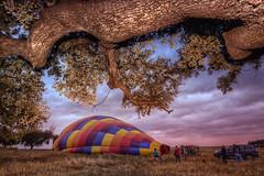 Wake up! (Zu Sanchez) Tags: globoaerostatico globo balloonride balloon hotairballoon sevilla seville sevilha sevillaban quercus encina chaparro hdr amanecer sunrise svq andalucia andalusia viveandalucia zusanchezphotography zusanchez canoneos70d canon canoneos