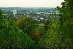 Fellbach (ES_789) Tags: sony a6000 herbst herbstfarben remstal