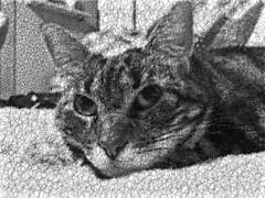 Scribbled Tigger 1 (sjrankin) Tags: 16june2017 grayscale processed scribble curves animal cat tigger closeup yubari hokkaido japan