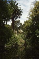 The Bends (Swebbatron) Tags: adelaide southaustralia australia botanicgardens garden tree pond reflection travel radlab 2008 fuji