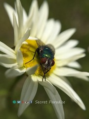 Green is in! #fly #naturebrilliance #secretparadise #secretgarden (SecretParadise75) Tags: fly naturebrilliance secretparadise secretgarden