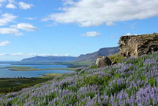 View from Úlfarsfell - Gengið á Úlfarsfell