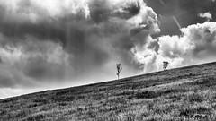 hill (ErrorByPixel) Tags: hill sky clouds trees grass bnw bw black white monochrome handheld czech republic czechia pentax k5 errorbypixel pentaxart rays light 50mm