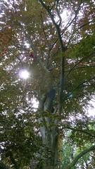 Fagus (arborist.ch) Tags: baumpflege buche arborist arboriculture baumklettern treeclimbing