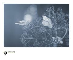 slp17-7737 (andypage7) Tags: westonbirt westonbirtarboretum summer vegetation