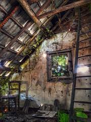 Maison Gandhi (Hélène Lili) Tags: urbex urbanexploration urban exploration abandoned abandon ue be belgium doraurbex dora baboucheurbex babouche teamlili maison house gandhi