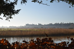 Framed Castle (Worthing Wanderer) Tags: sussex westsussex arunvalley arundel arundelpark winter frosty sunny december southstoke