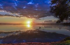 The Lonely Pelican (iolite1) Tags: budgewoi lake nsw australia sunrise landscape