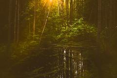 Forest Pond (Jyrki Salmi) Tags: jyrki salmi kotka finland forest mosquitos sunlight ray