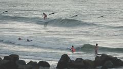 day at the beach....pelicans, surfers and boogie boarding (laughlinc) Tags: bird pelican boogieboard beach nikon surfer follybeach nikon7200