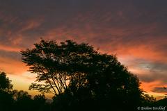 Sunset (Enilton Kirchhof) Tags: pordosol sunset santamariars santamaria riograndedosul brazil br silueta arvore contraluz