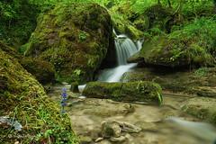 Bach / Creek (Claudia Bacher Photography) Tags: bach creek wasser water wald forest moos moss fällanden schweiz suisse switzerland sonya7r nature natur naturphotography
